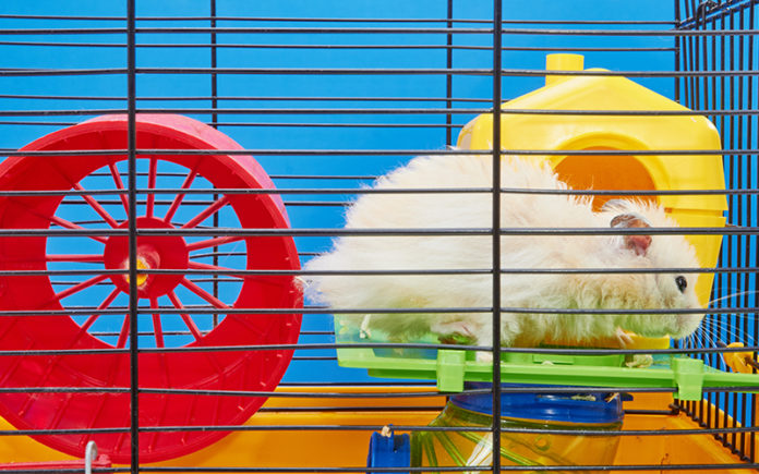 large hamster cages