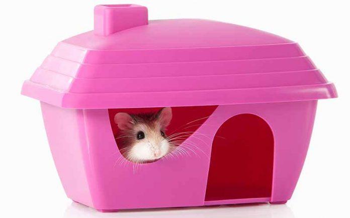Robo Hamster Care Guide
