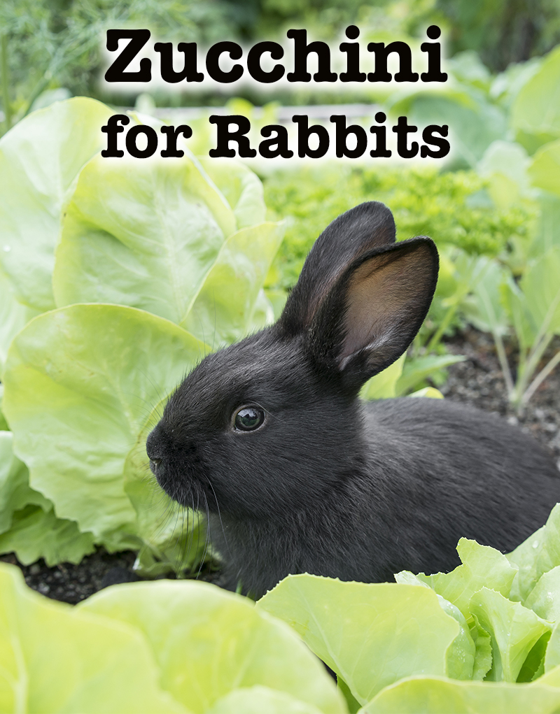 can rabbits eat zucchini