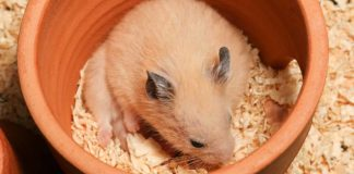best bedding for hamsters