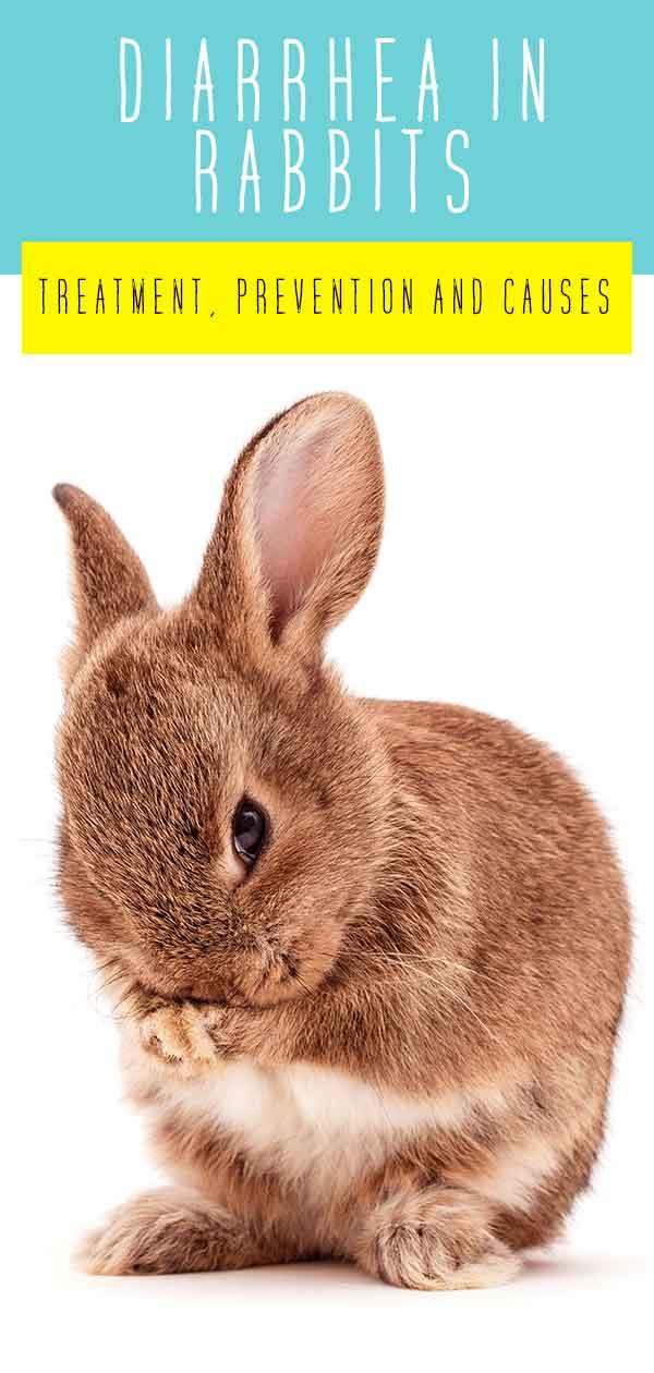 Rabbit Diarrhea – Treatment, Prevention and Causes Of Bunny Diarrhea
