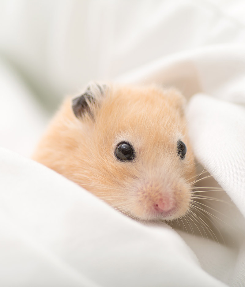 What Is The Best Bedding For Hamsters