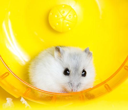 best hamster wheel