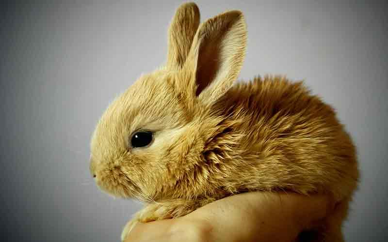 baby rabbit diarrhea