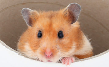 Hamster tunnels