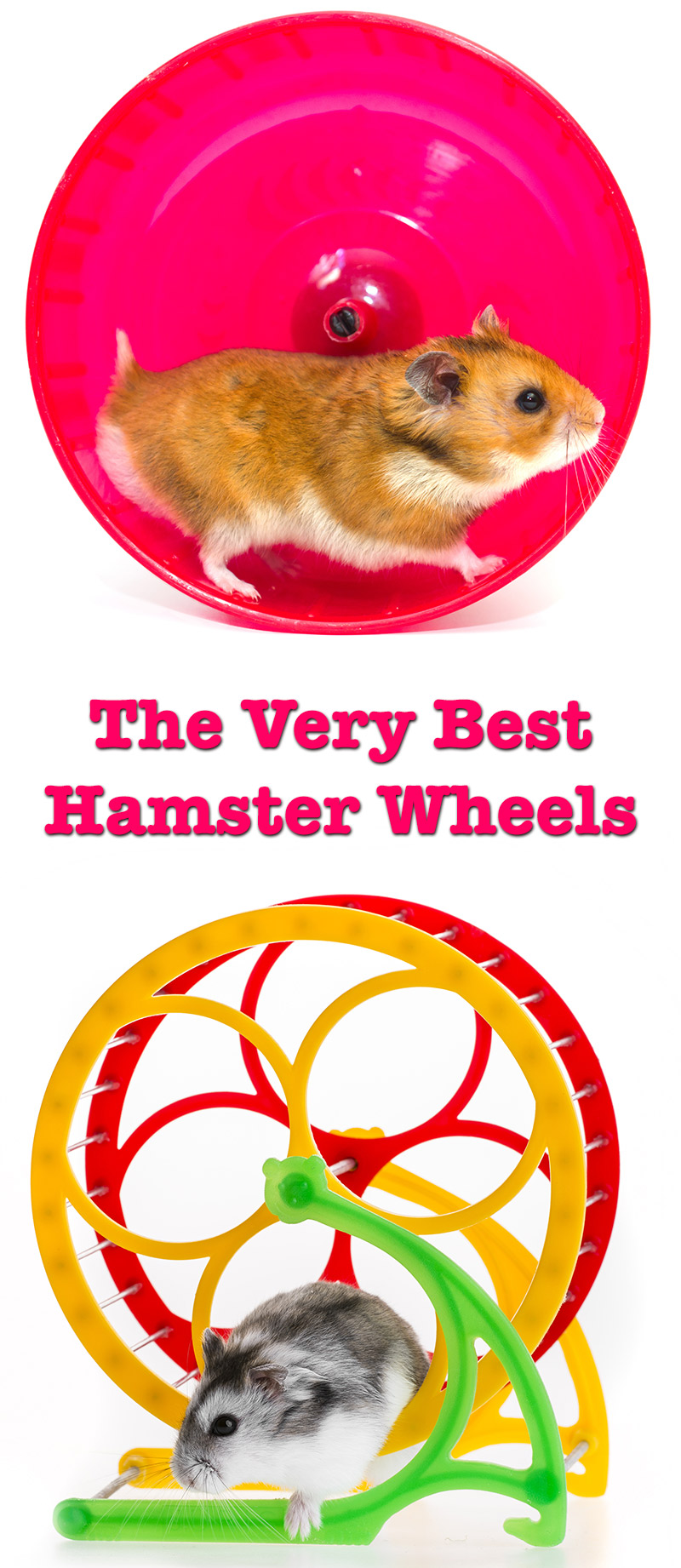 Best Hamster Wheels