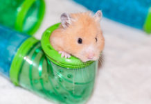 Best Hamster Playpens