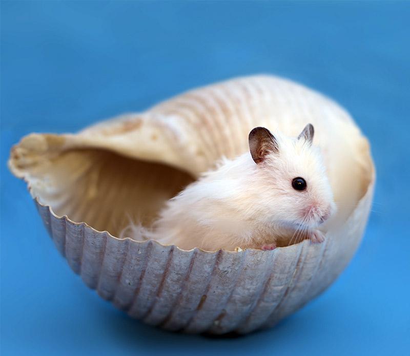homemade hamster toys