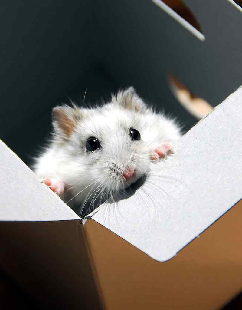 Diy Hamster Toys The Best Creative Homemade Hamster Toys