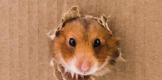 DIY Hamster Toys