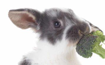 can rabbits eat brocolli