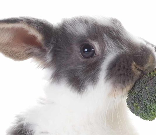 can rabbits eat brocolli