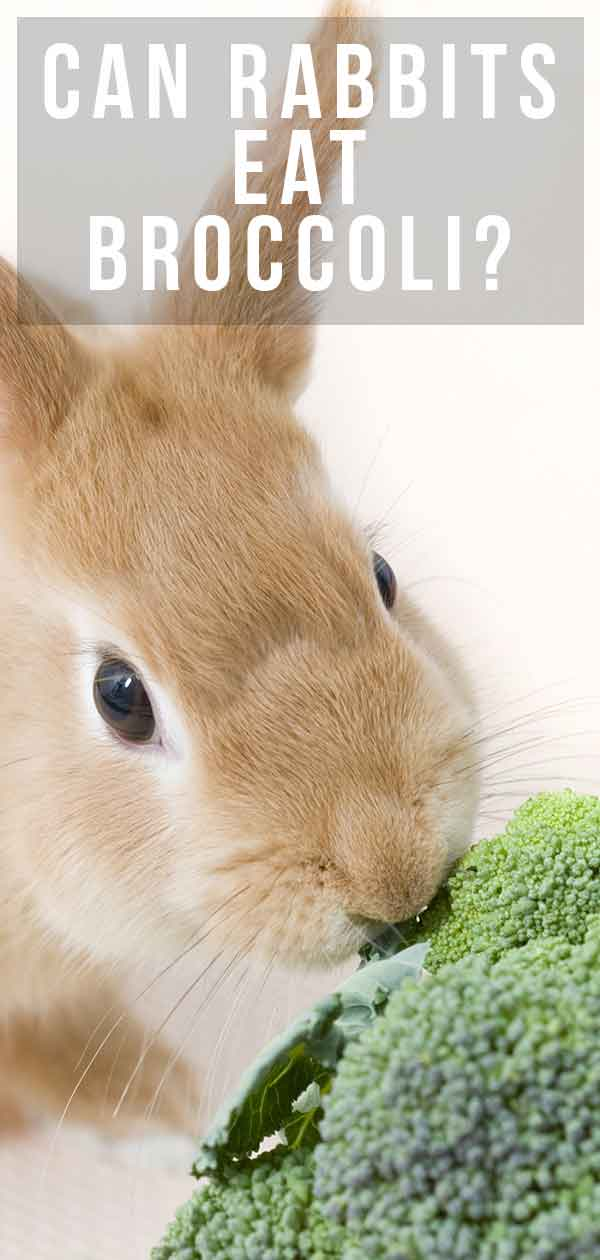 can rabbits eat broccoli