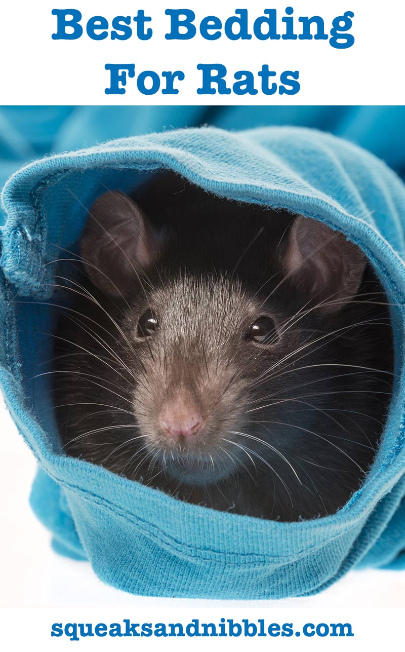 best bedding for rats