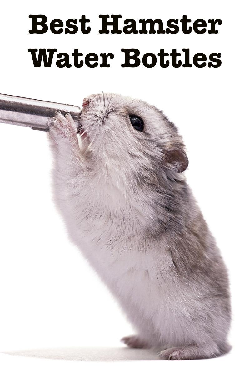 Best Hamster Water Bottle