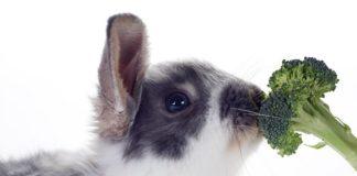 Can Rabbits Eat Broccoli?
