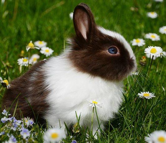 best rabbit food