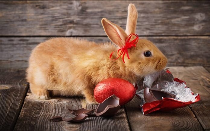 can bunnies eat chocolate?