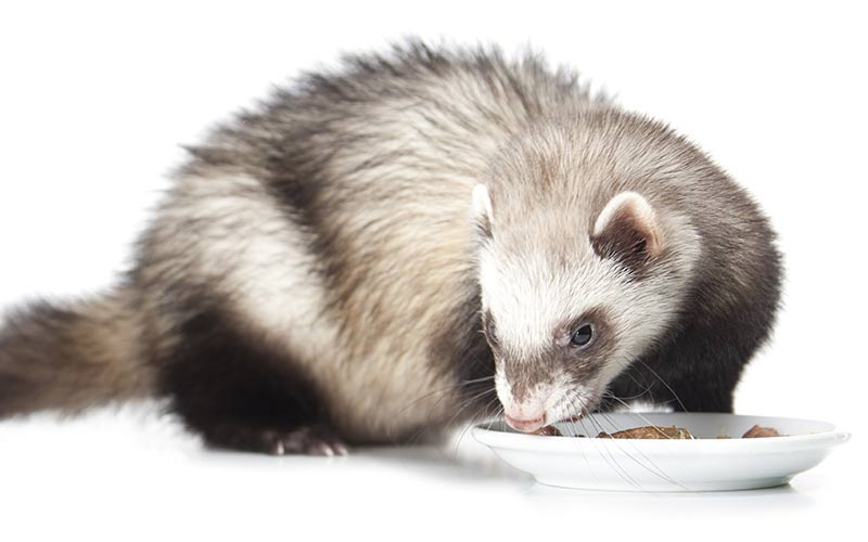 Best Food For Ferrets Chart
