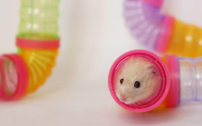 Best Hamster Accessories