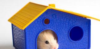 Best Hamster Houses