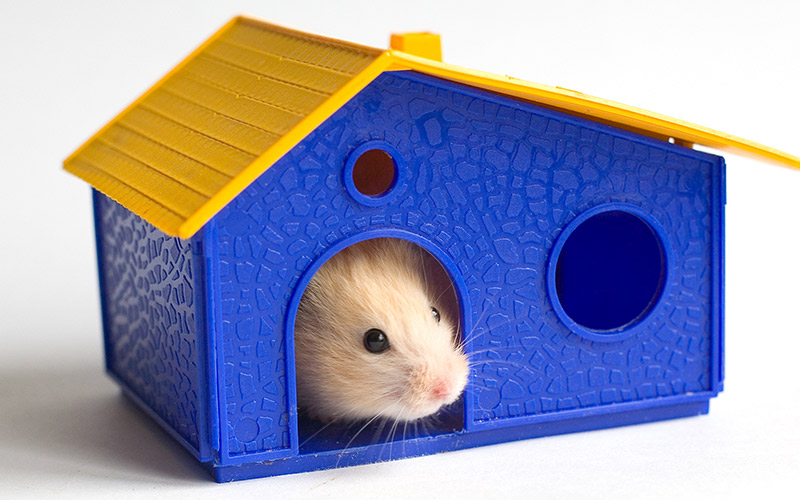 Best Hamster Houses Hideaways And Caves Squeaks And Nibbles