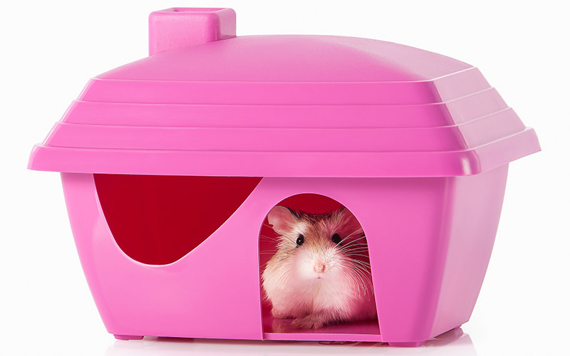 Hamster Houses - The Best Hamster Hideaways and Caves