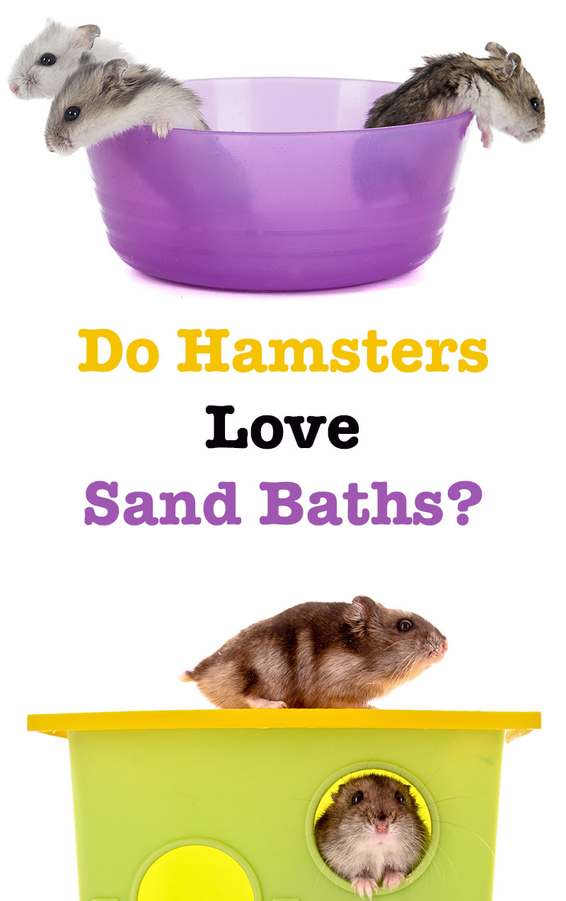 how to give a hamster a sand bath