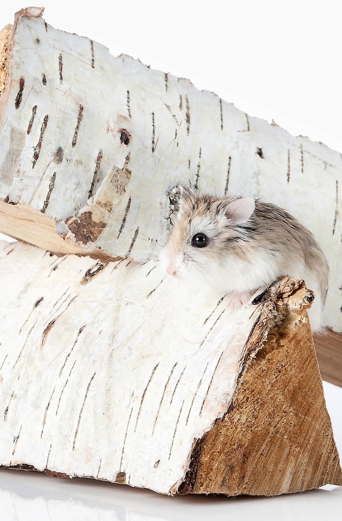 best roborovski hamster cages