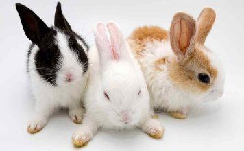 can rabbits eat bananas