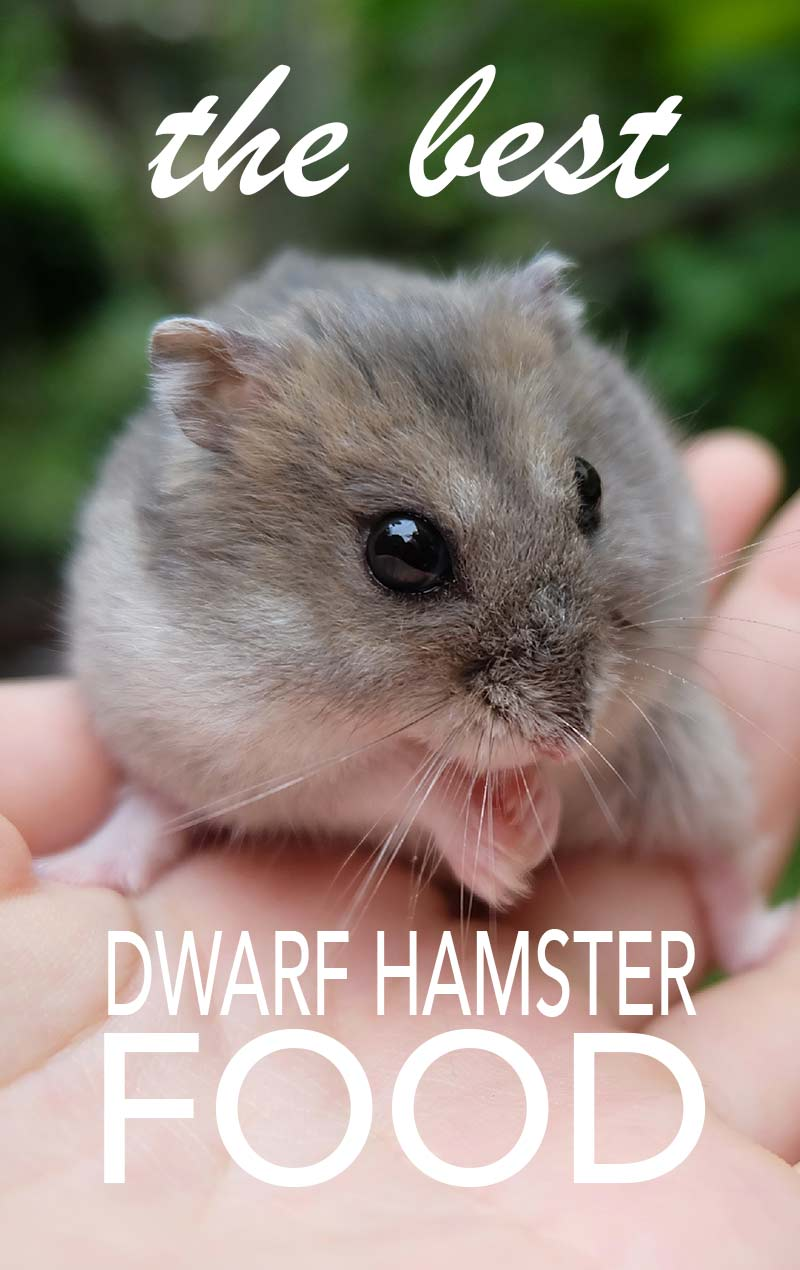 The best dwarf hamster food - reviews and feeding tips