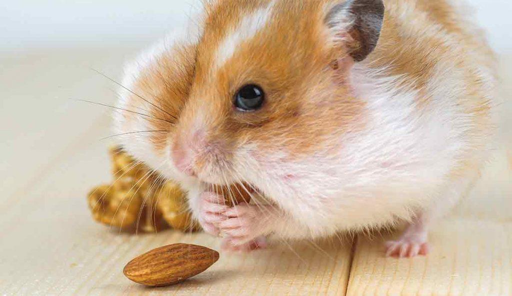 girl hamster names