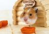 hamster stuff