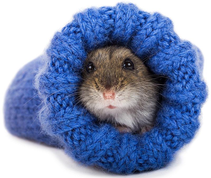 dwarf hamster stuff