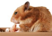best hamster treats