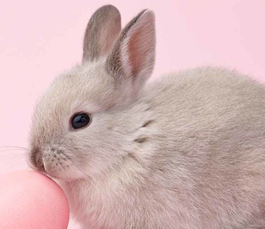 Bunny Names - All The Best Rabbit Names In One Place