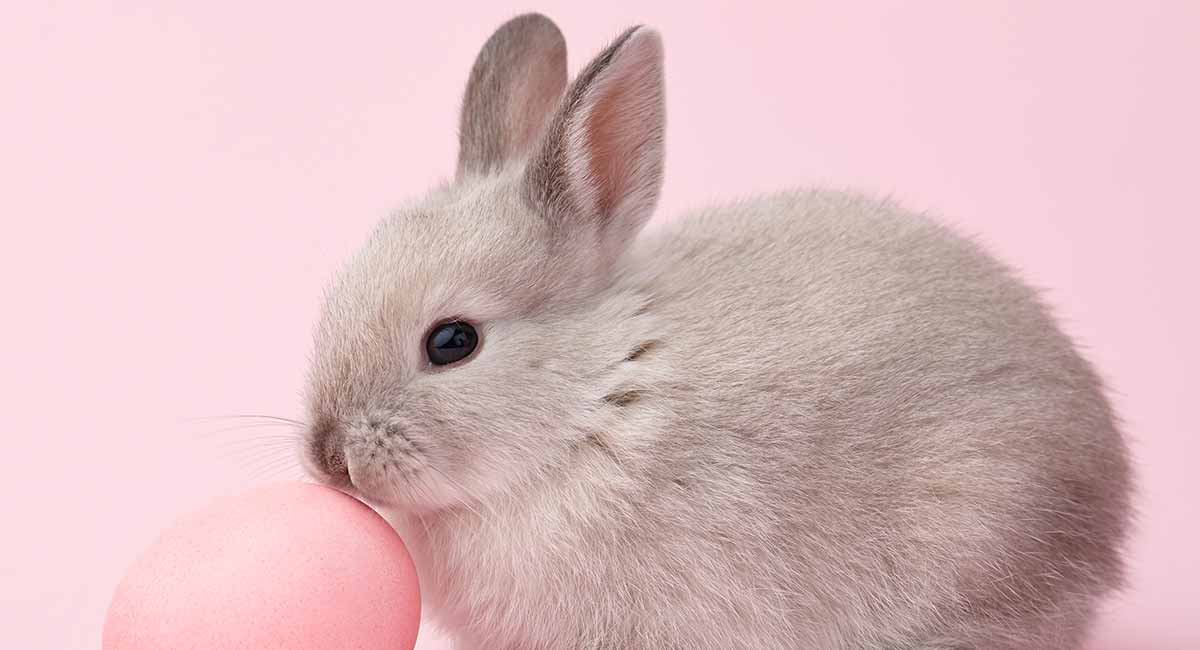 Bunny Names All The Best Rabbit Names In One Place