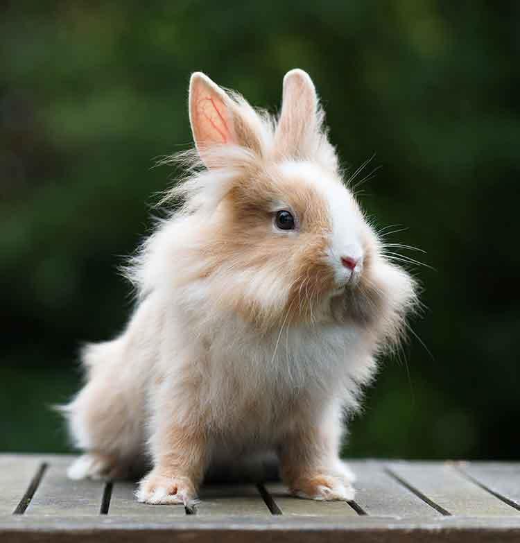 cute fluffy bunny