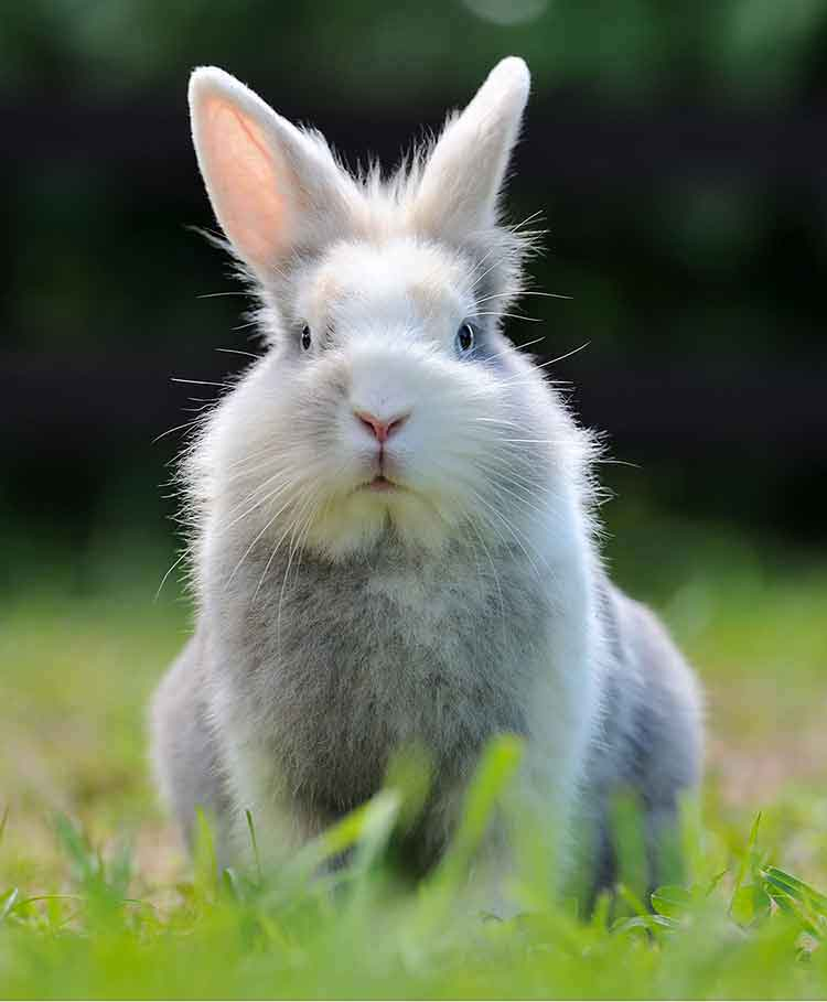 rabbit names to inspire you