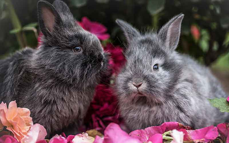 Rabbit names for grey rabbits