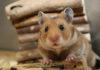best hamster chew toys