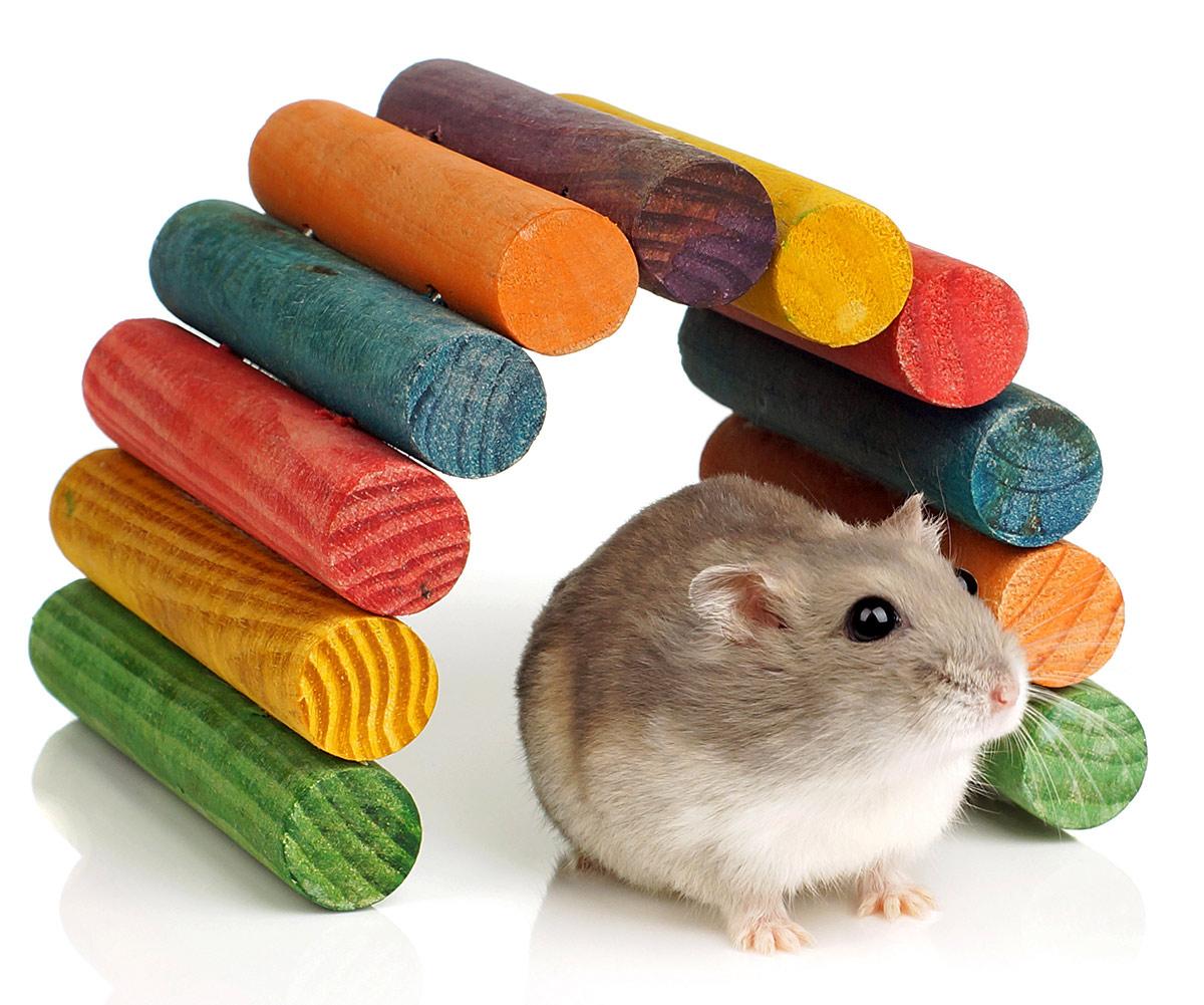 dwarf hamster chew toys