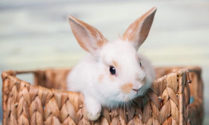 rabbit names