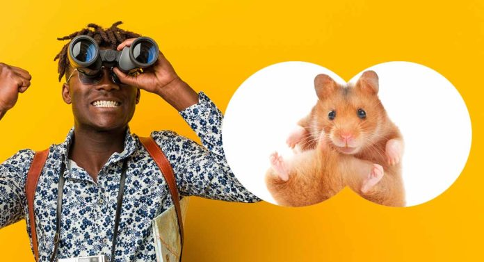 where to buy a hamster