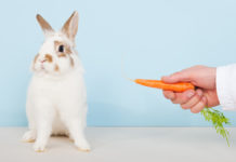can rabbits eat carrots