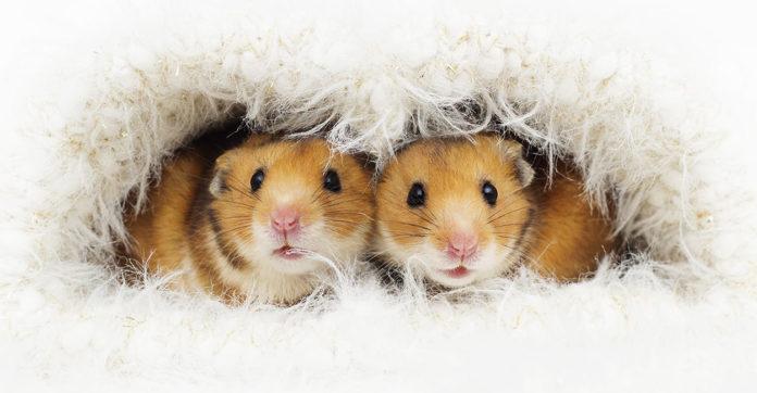 hamster starter kit