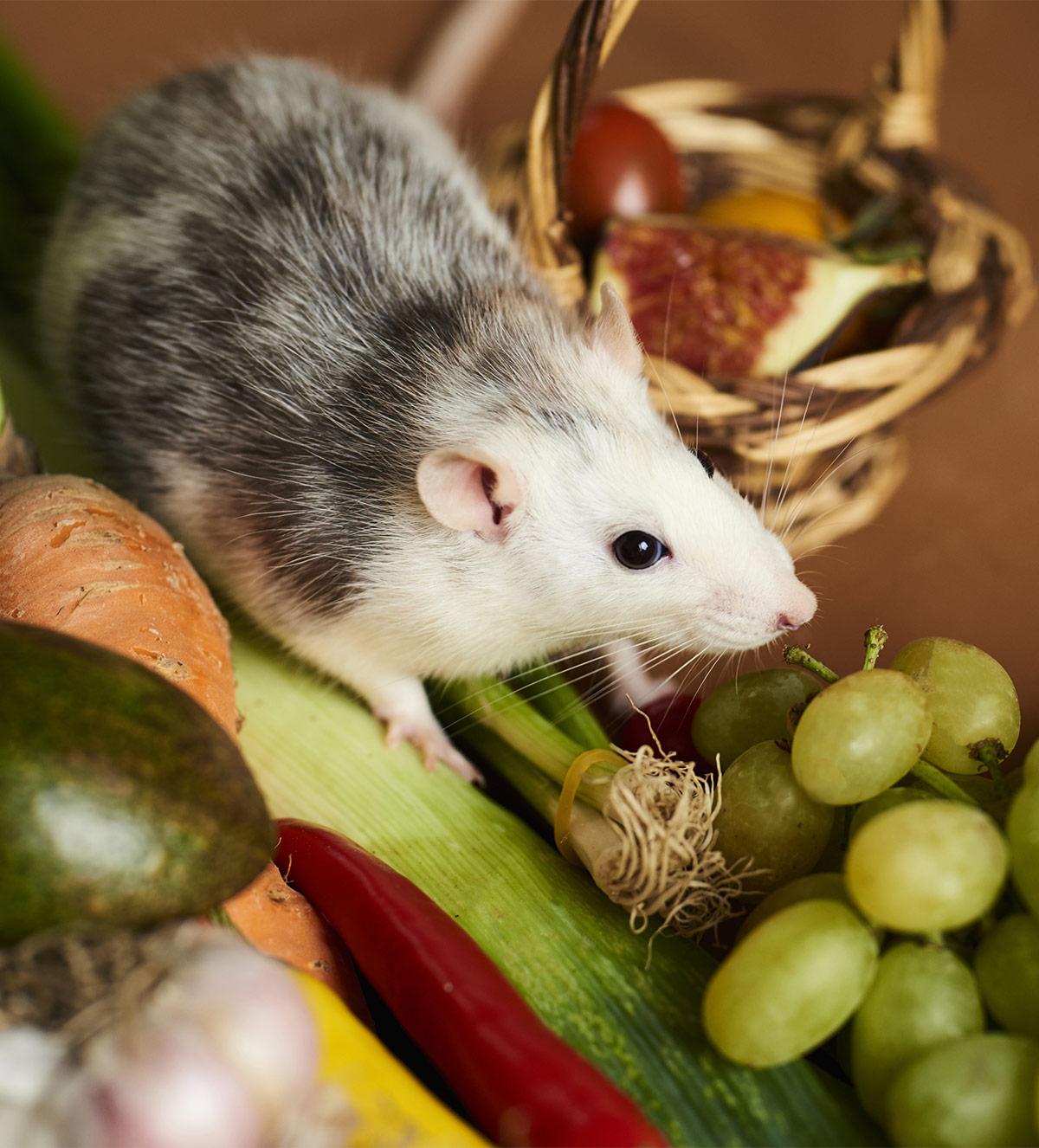 Rat Food Guide