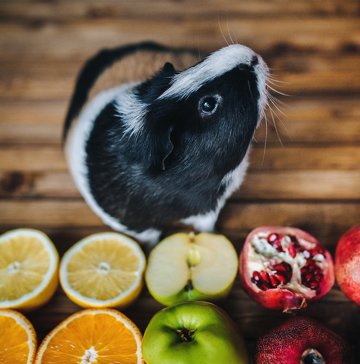what kind of fruit can guinea pigs eat