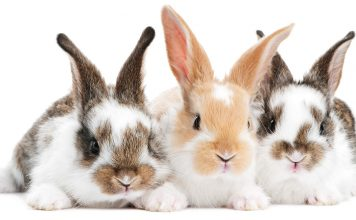 metacam for rabbits