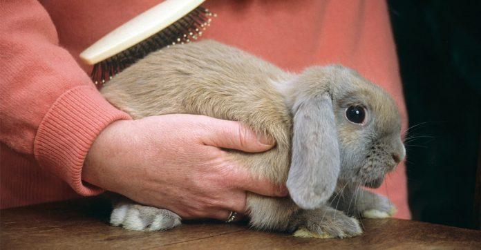 rabbit grooming brush